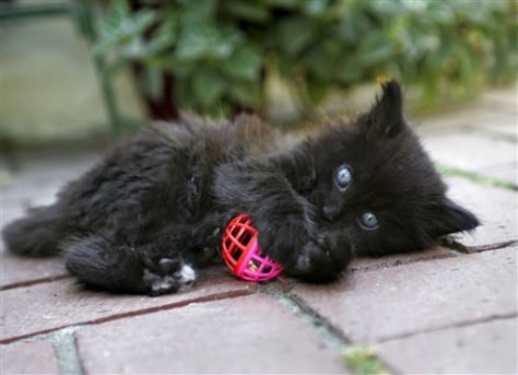 Image: a black kitten playign with a ball