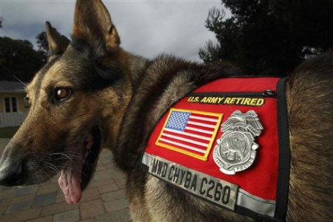 Image: Chyba, 12-year-old former military dog