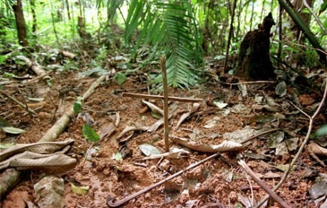 Image: Cross over grave in forest