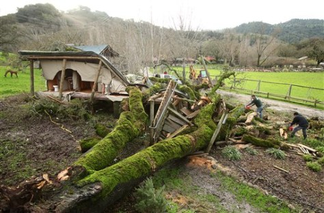 Image: Crew members try to remove a fallen oak tree