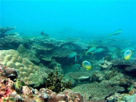 Image: Coral reef