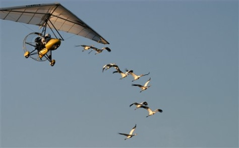 Image: Aircraft guides whooping cranes