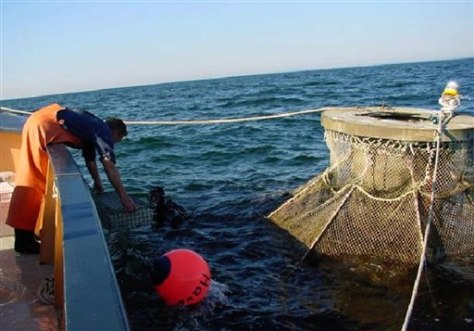 IMAGE: OFFSHORE FISH FARM PROJECT