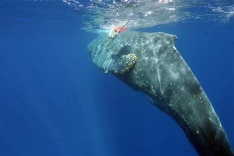 IMAGE: BUOY, FISHING LINE ON WHALE