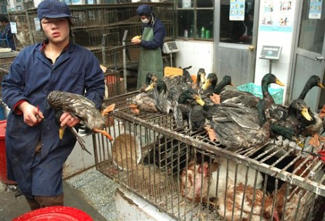 Image: Chinese poultry market worker
