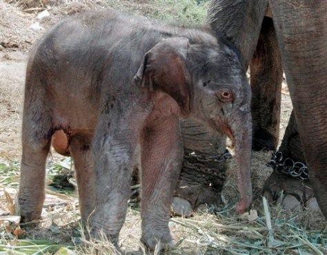IMAGE: NEWBORN ELEPHANT