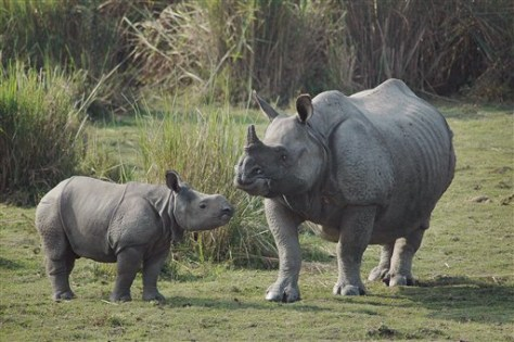 Images: India Rhino Poaching