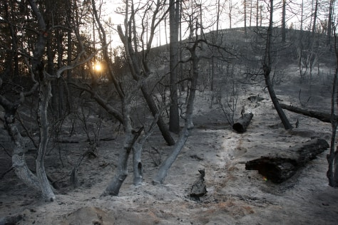 Image: Burned area in Angeles National Forest
