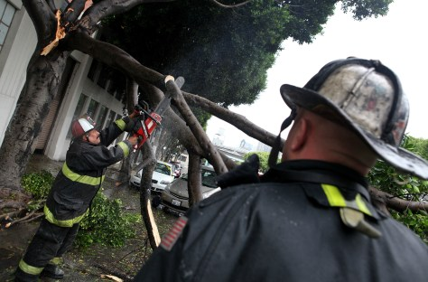 Image: Fallen tree in San Francisco