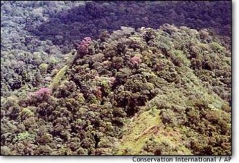 Image: Amazon park