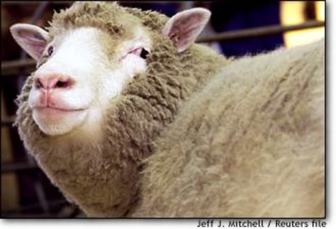 Image: Dolly The Sheep