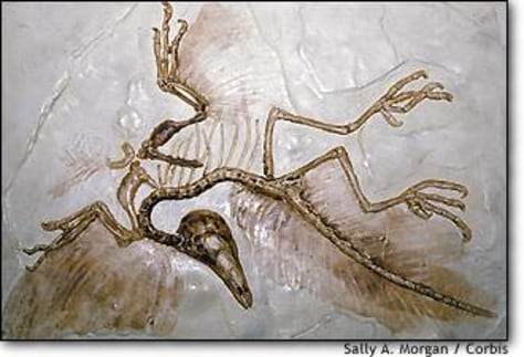 Image: Archaeopteryx