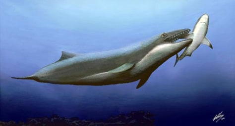 Illustration: 25-million-year-old whale