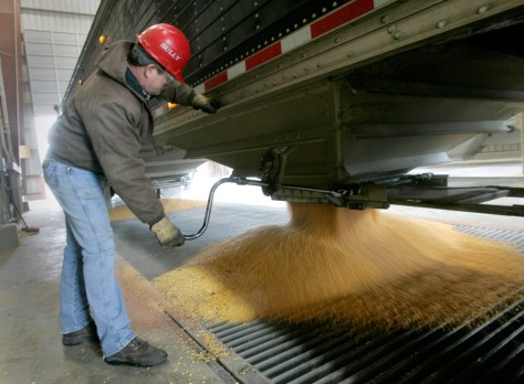 Image: A truckdriver unloads his cargo of corn into a chute at the Lincolnway Energy plant in Nevada, Iowa