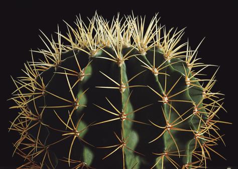 Image: Cactus