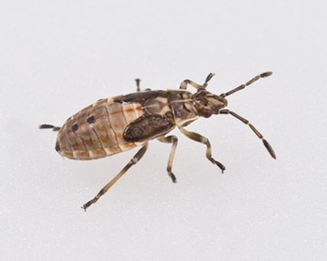 Image: Mystery bug
