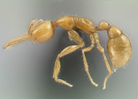 Image: New ant