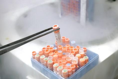 Image: Stem cells