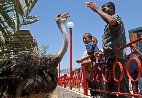 Image: Palestinian zoo worker Wael Abu Muhammed and visitors play with an ostrich