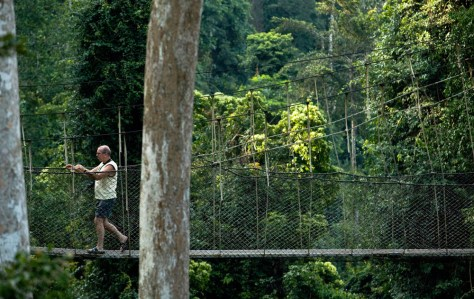 Image: A visitor walks along the canopy walk