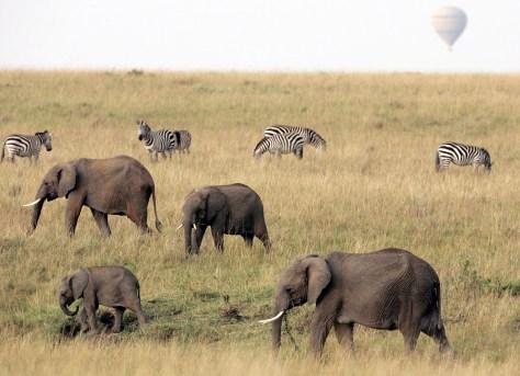 Image: Masai Mara