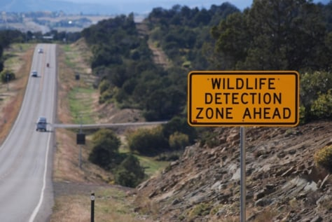 Image: Wildlife detection sign
