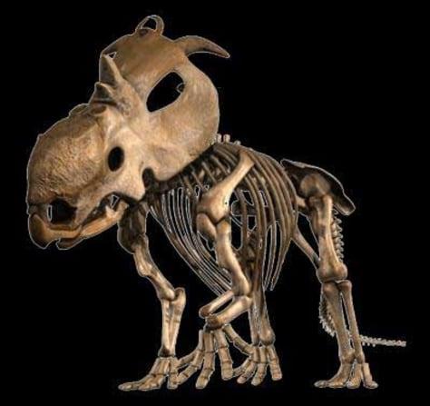Image: Pachyrhinosaur lakustai