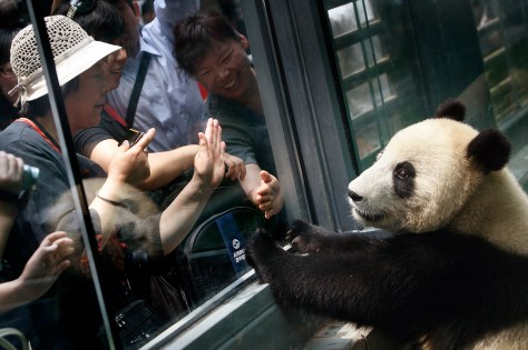 Image: Panda at a zoo in Beijing