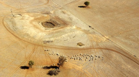 Image: Sheep wander parched land near a dry reservoir