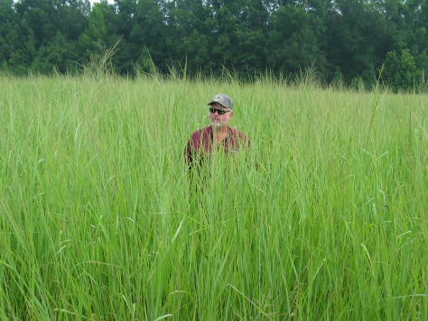 Image: Switchgrass field