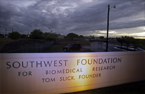 Image: Southwest Foundation for Biochemical Research