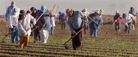 Image: Migrant farmers