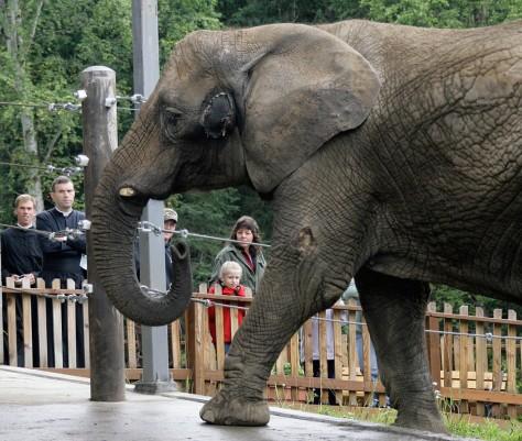 Image: Elephant Maggie