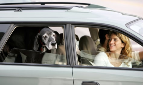 Image: dog in car
