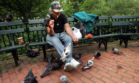 Image: PIGEONS FED IN NY PARK