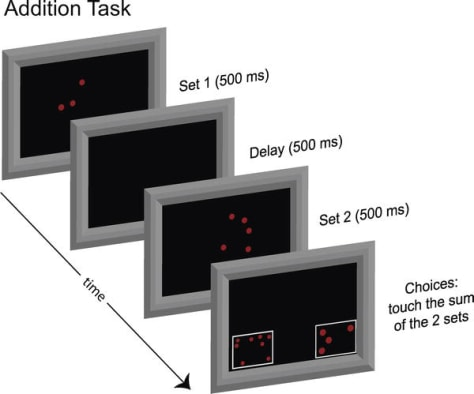 Image: Addition task image