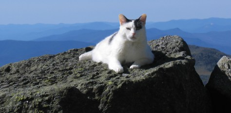 Image: housecat Nin atop Mount Washington.