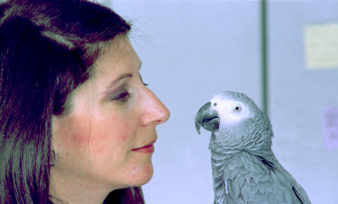 Image: Irene Pepperberg with Alex, her African gray parrot