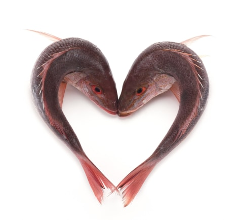 Image: Two fish in a heart