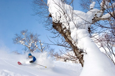 Image: Skier in deep powder