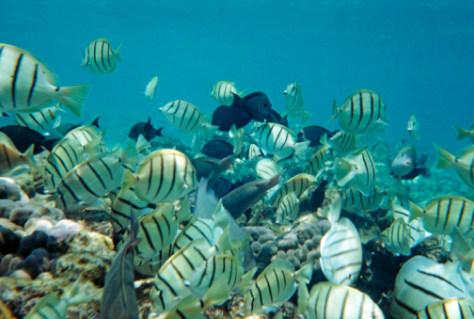 Image: Marinelife