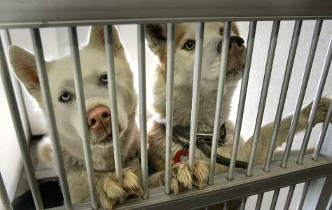 Image: Caged dogs
