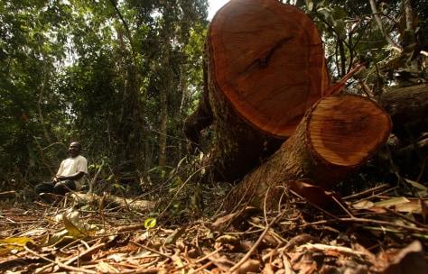 Image: Nigeria deforestation