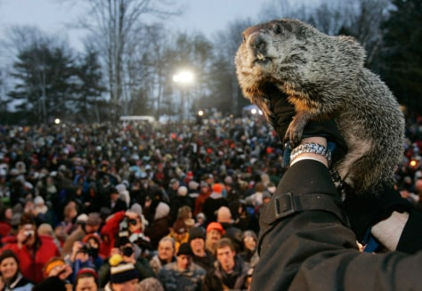Image: Punxsutawney Phil is held up to the crowd at Gobbler's Knob