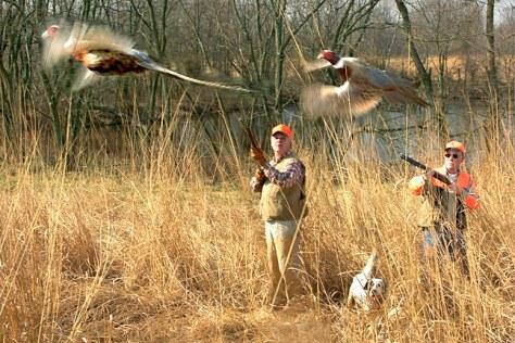 Image: Pheasant hunters