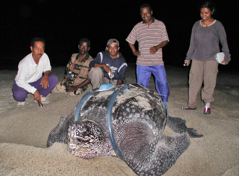Image: Members of a World Wildlife team gather for a group photo with a leatherback turtle