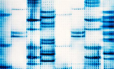 Me hice un ADN y evalué mi arianidad