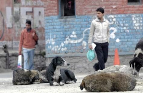 Image: Stray dogs in central Srinagar, India.