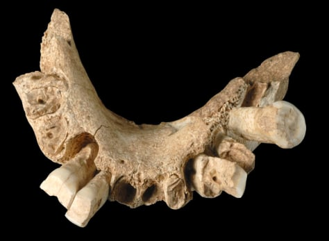 Image: Jawbone unearthed in Spain