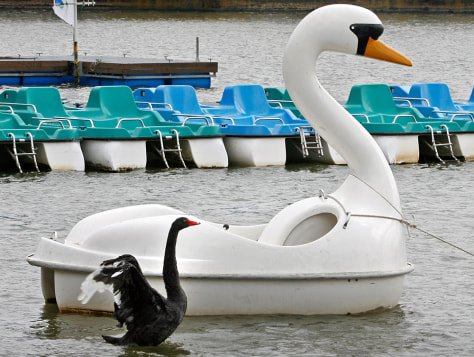 Image: swan boat